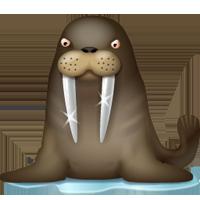 walrus_small